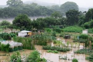 水に浸かった畑