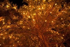 木に輝くイルミネーション