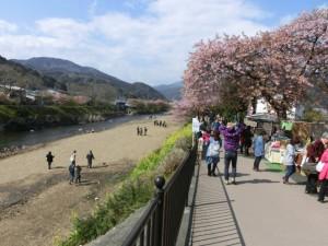 川岸に咲く河津桜