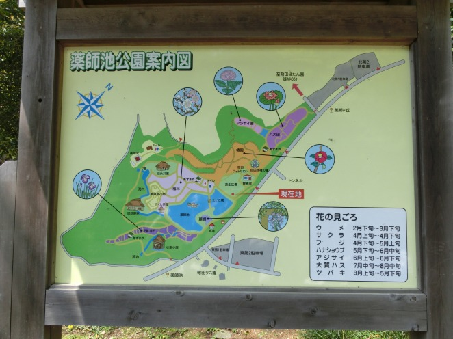 薬師池公園全体図