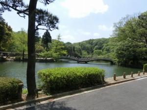 薬師池公園 タイコ橋