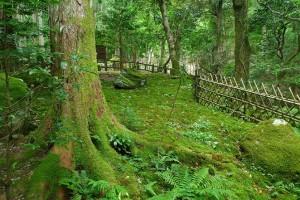 苔のある景色